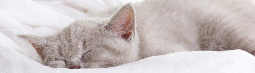 Better Sleep for Teens